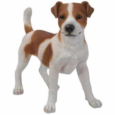Beeld jack russel terrier bruin/wit 35 cm
