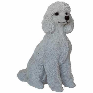 Beeld zittende witte poedel hond 32 cm