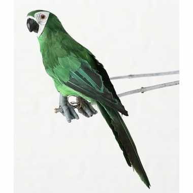 Dierenbeeld groene ara papegaai vogel 33 cm hangdecoratie